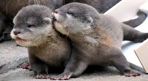 Image result for otters
