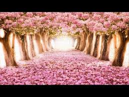 The Most <b>Beautiful Flowers</b> Streets in the world - YouTube