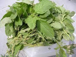 thotakura plant కోసం చిత్ర ఫలితం
