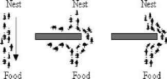 Ant Colony Optimization to Detect Network Risks Ijser