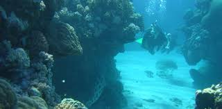 death on the great barrier reef how dead coral went from economic 2v38hr2v 1476751260