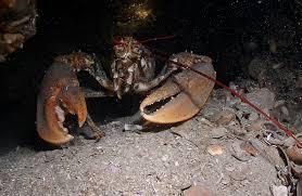 Výsledek obrázku pro croatia deepsea