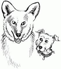 Οι λύκοι ψάχνουν για τροφή...