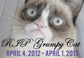 Forbes Calls Upon Grumpy Cat For Business Advice - She Is ... via Relatably.com