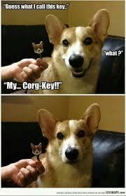 Dog memes on Pinterest   Funny Dog Memes, Funny Pugs and Pugs via Relatably.com