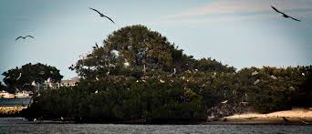 bird island n river lagoon one of florida s most important share this