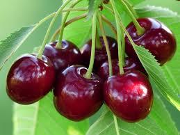 Mengurangi risiko kanker dengan mengkonsumsi buah ceri
