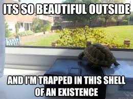 its so beautiful outside and i'm trapped in this shell of an ... via Relatably.com