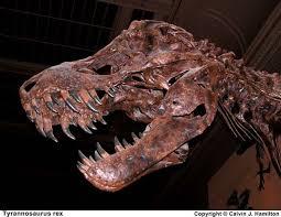 <b>Tyrannosaurus Rex</b>: Facts about <b>T. Rex</b>, King of the <b>Dinosaurs</b> | Live ...
