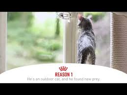 <b>Gastrointestinal</b> Cat Food - <b>Royal Canin</b>