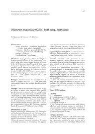 (PDF) Ptilostemon gnaphaloides (Cirillo) Soják subsp. gnaphaloides