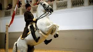 NATURE | The World Famous Lipizzaner Stallions | Legendary ...