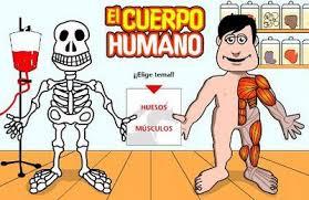 http://www.cajastur.es/clubdoblea/diviertete/juegos/elcuerpohumano.html