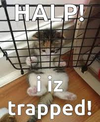 Kitten Meme Trapped on imgfave via Relatably.com