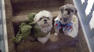 How <b>CUTE</b> are these <b>costumes</b>?! Here is... - Rosslyn <b>Veterinary</b> ...