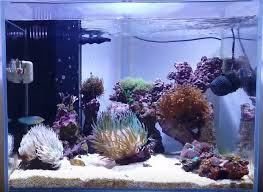 The 10 Best <b>LED Aquarium Lighting</b> - Guide & (2019 Reviews)