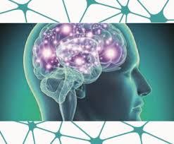 Resultat d'imatges de bases neurologicas y biologicas de la reisilencia