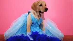 1 <b>Puppy 5</b> Disney Princesses - YouTube