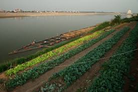 mekong jdp the mekong river thailand and photo essays tiered agriculture and floating aquaculture farms make up a common scene along the banks of the