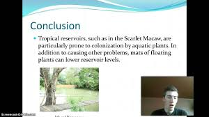 water pollution conclusion uf  water pollution conclusion uf 300