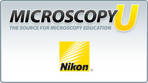 Introduction to <b>Stereomicroscopy</b> | Nikon's MicroscopyU