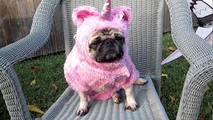"""Résultat de recherche d'images pour """"image drole d'animaux mal habiller"""""""