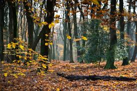 <b>Autumn Forest</b> Images | Free Vectors, Stock Photos & PSD
