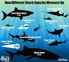 biofluorescent sharks glowing messages revealed by shark vision biofluorescent sharks glowing messages revealed by shark vision camera