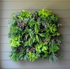 buy grovert living wall planters