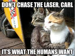 Memes Vault Funny Cat Meme Cheer Up via Relatably.com