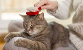 The 25 Best <b>Pet Hair</b> Removers of 2019 - Cat Life Today