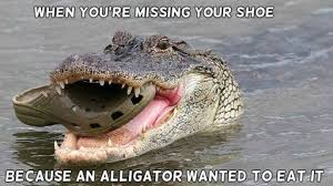 Agitated Alligators | MaxAnimal via Relatably.com