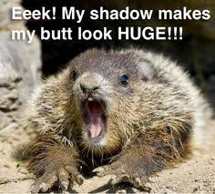 Image result for picture funny groundhog