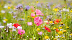 Image result for flower photos