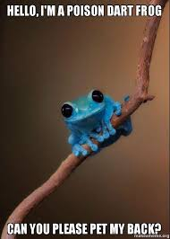 Hello, I'm a poison dart frog can you please pet my back? - Small ... via Relatably.com