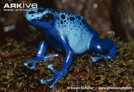 Image result for arkive frog