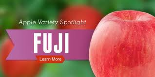 Image result for fuji apple