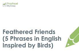 feathered friends phrases in english inspired by birds