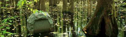 Louisiana Purchase State Park