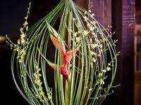 56 Best <b>Bird</b> of paradise garden images | <b>Birds</b> of paradise, Planting ...