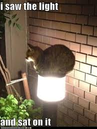 <b>Cat</b> saw the <b>light</b>. pinned by www.affordablecomp.net | <b>Funny</b> animal ...