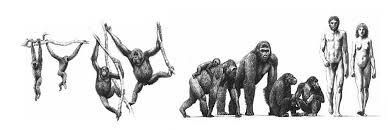 Resultado de imagen de Los primeros vertebrados terrestres tienen ahora unos 325 millones de años y 200 los primeros mamíferos.