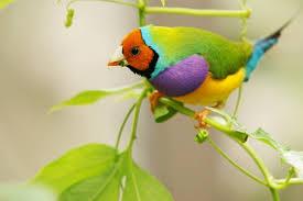 اجمل العصافير في العالم images?q=tbn:ANd9GcS