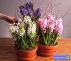Как подобрать цветы в домашних условиях