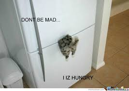 Hungry Cat Is Hungry! by 11pinkypie - Meme Center via Relatably.com