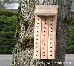 heres more information about mason bees if youre curious if youd really like to learn about them read this book the orchard mason bee the life build diy mason