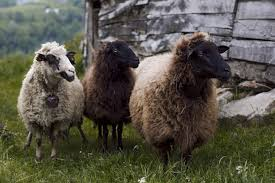 5 critical content marketing interview questions choose your marketing firm sheep wannabes or leaders