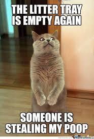 Crazy Cat by anifreak13 - Meme Center via Relatably.com