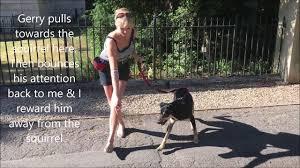<b>Joyful Dogs</b> Training - YouTube