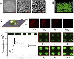 High-Throughput Nano-Biofilm Microarray for Antifungal Drug ...